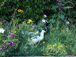 Blütenspaziergang
