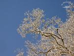 Ein sonniger Wintertag