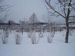 Kreisacker in der Winterruhe