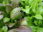 Knackfrischer Asia Salat