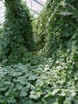 Wogende Pflanzenpower