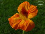 Orangene Körper- Seelen- und Geisthebung