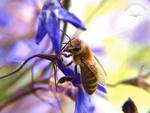 Bienenlust & Pflanzenfreude