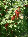 Rot und süß...Fruchtaufstrich lecker