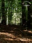 Eingang zum Bärlauch Zauberwald