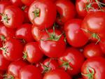 Tomaten fein