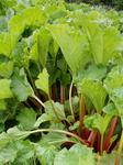 Köstliches zartes erdbeeriges Aroma das echt überzeugt