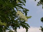 Blüten und Himmel, gibt himmlische Blüten