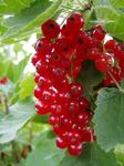 Fruchtiges für unseren Fruchtaufstrich