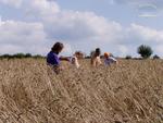 Saatgut wird sorgfältig selektiert